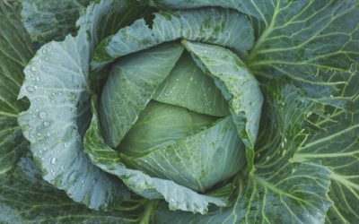 Kalzium in pflanzlichen Lebensmitteln
